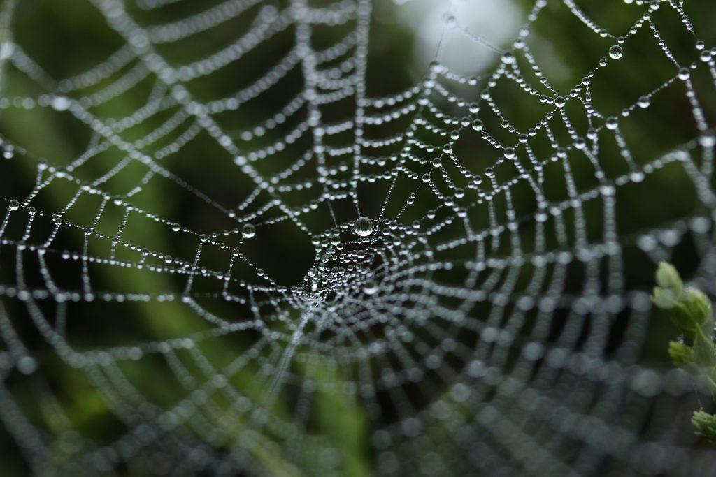 Interne linkstructuur oftewel een SEO spinnenweb